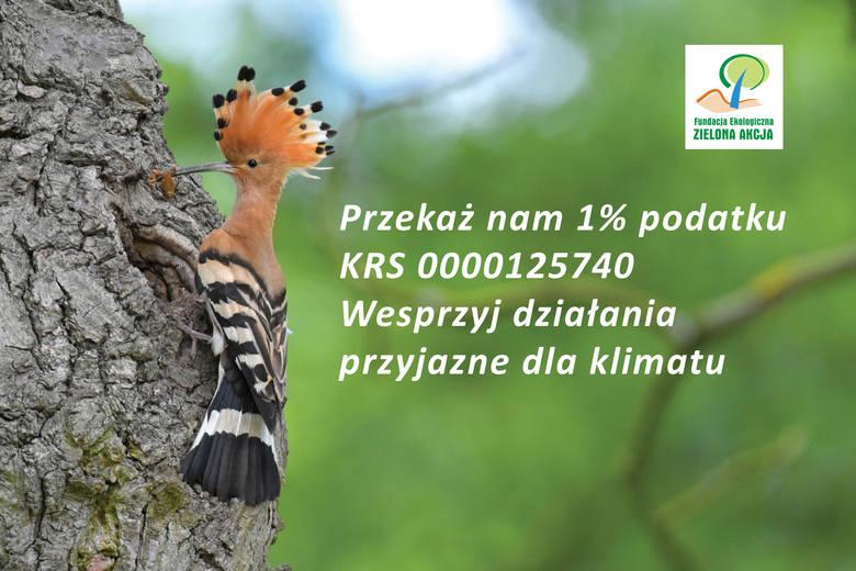 Fundacja Zielona Akcja. Przekaż nam 1% podatku. KRS 0000125740