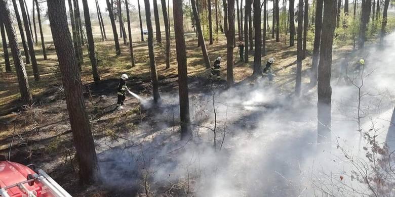 W czwartkowe popołudnie doszło do kolejnego pożaru w podłabiszyńskich lasach. Tym razem strażacy walczyli z ogniem w Smerzynie. Pojawili się w samą porę.