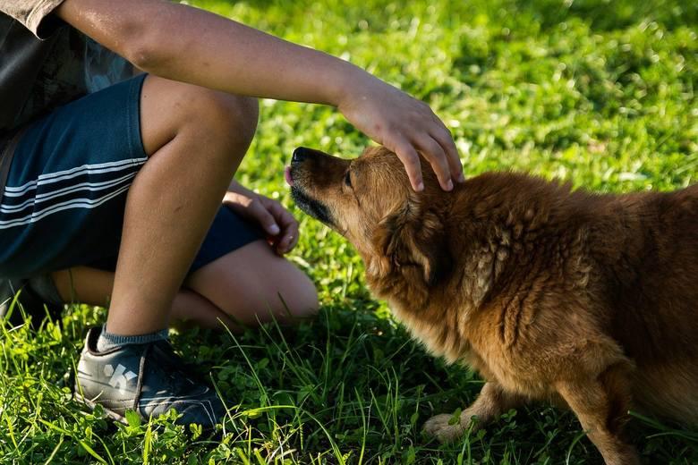 Eksperci zalecają także ograniczenie kontaktu ze zwierzętami, w szczególności bezpańskimi lub należącymi do innych osób.<br />