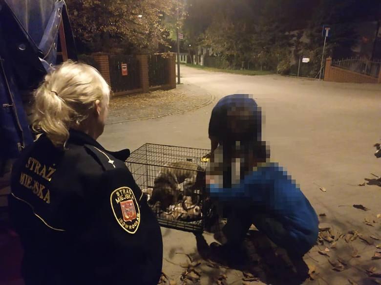 Wczoraj wieczorem (19 października) straż miejska w Inowrocławiu otrzymała zgłoszenie w sprawie dwóch psów przywiązanych sznurkiem do drzewa na niezabudowanej