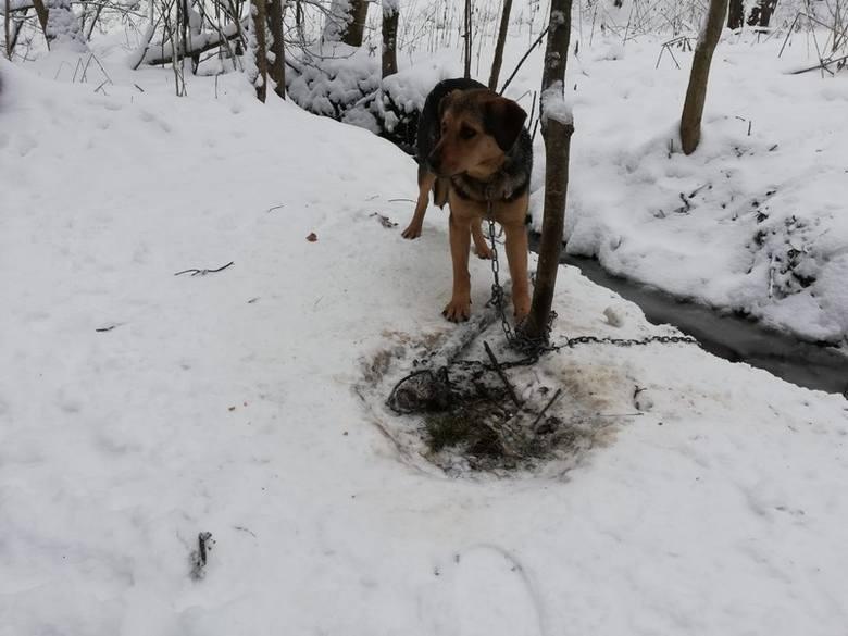 W sobotę po godz. 12, oficer dyżurny krośnieńskiej policji otrzymał informację o porzuconym psie w miejscowości Kombornia. Zwierzę znajdowało się kilkaset
