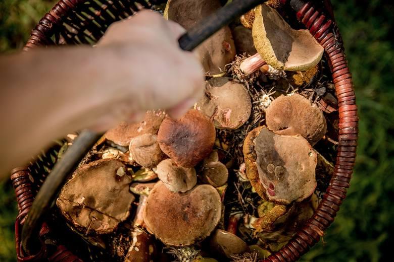 W portalach społecznościowych można natrafić na zdjęcia koszy pełnych grzybów - niestety większość nie pochodzi z naszego regionu. W całym kraju we znaki