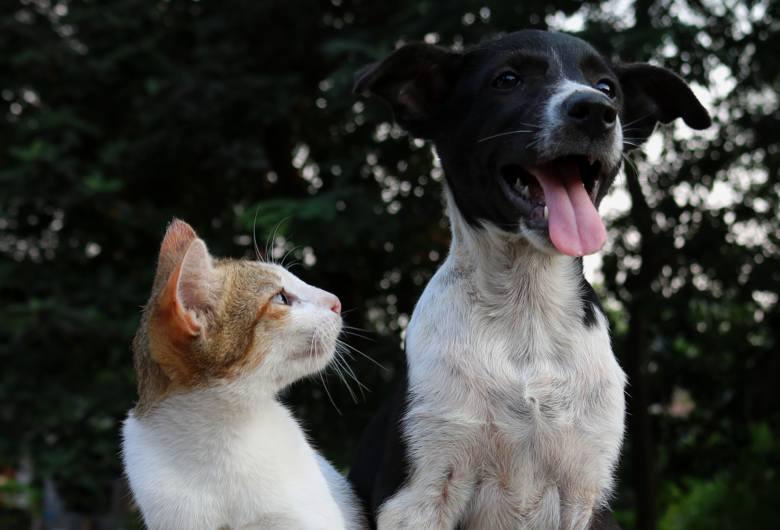 Psy i koty – większość z nas je kocha i nie wyobraża sobie bez nich domu. Musimy jednak mieć świadomość, że mogą one być nosicielami chorób, którymi