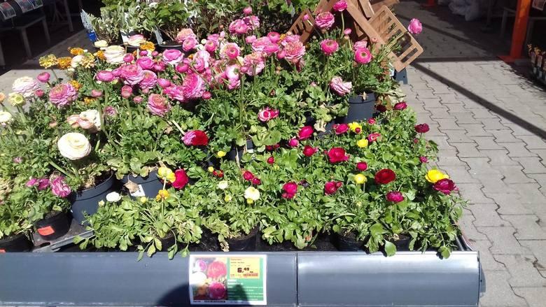 """Łodzianie na """"kwarantannie"""" kupują rośliny na przydomowe rabaty i na balkony"""