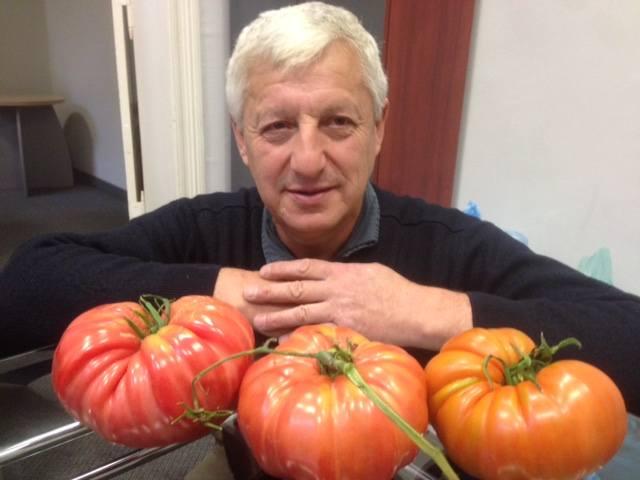Wielkie pomidory malinowe wyhodował nasz Czytelnik, Zbigniew Oleksiejuk z Raculi