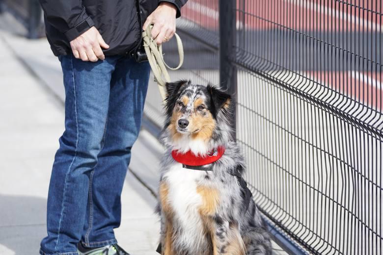 Spokojne rasy psów. Te rasy psów są idealne dla osób, które nie miały jeszcze do czynienia z pupilami. Poznaj rasy psów dla początkujących