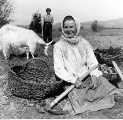 Zabieramy Was w podróż w czasie, sprawdźcie archiwalne zdjęcia z polskiej wsi. Uściślając, wykopków.Przedstawiona fotografia powstała w okolicach Nowego