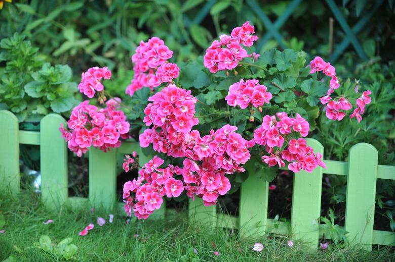 2. RoślinyTarczę ochronną przed komarami stanowią rośliny (można je posadzić na działce, w ogrodzie, ale też na przykład w doniczce na parapecie). Te