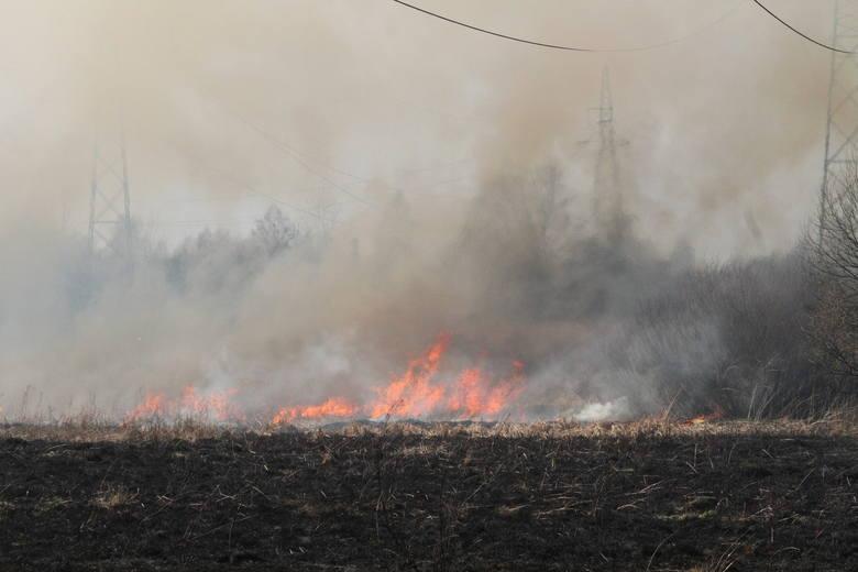 Płoną trawy w województwie świętokrzyskim. Od początku roku do rana we wtorek, 12 marca strażacy wyjeżdżali do akcji 1010 razy. Łącznie ogień pochłonął