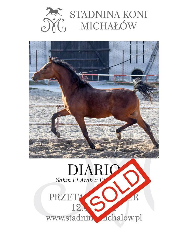 Koń Diaro znalazł nabywcę we Francji.