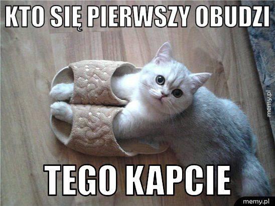 17 lutego przypada Światowy Dzień Kota. W Polsce obchodzony dokładnie od 2006 roku. To wyjątkowy dzień, który ma podkreślić znaczenia kotów w życiu człowieka.