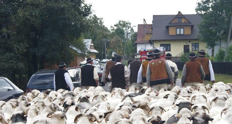 Rolnicy z Podhala - zdjęcie ilustracyjne