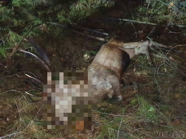 Wypadek w Jełowej. Kierowca bmw potrącił jelenia