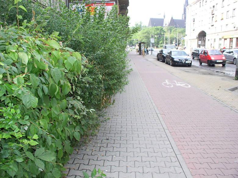Gdzie jest chodnik? Krzaki zarosły przejście przy Wyszyńskiego (LIST, ZDJĘCIA)