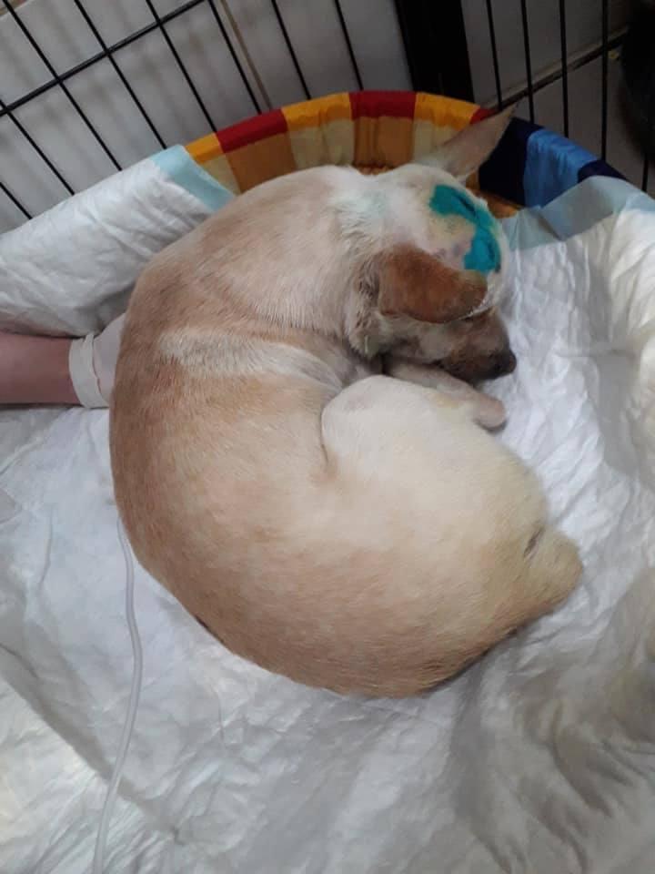 Pieska znaleziono na śmietniku przy ul. Zielonej w Chojnicach