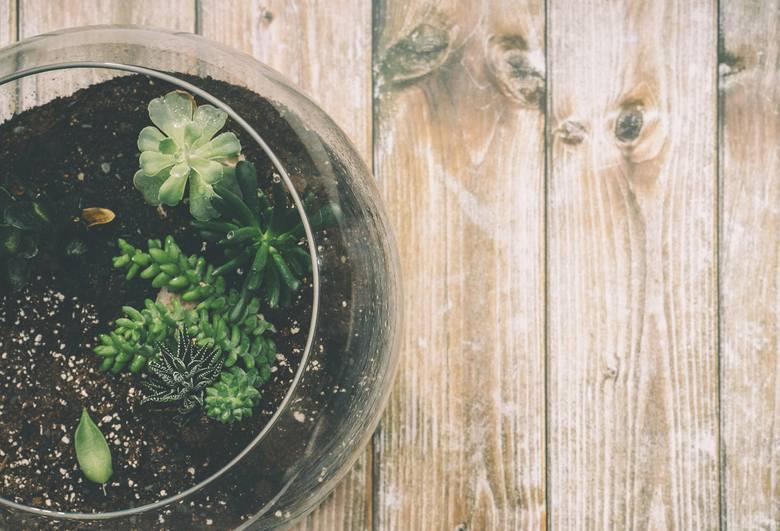 Ogród w słoikuZamiast kupować tradycyjne kwiaty, możemy podarować naszej Mamie coś znacznie ciekawszego: ogród w słoiku. Gdy wykonamy go własnoręcznie,