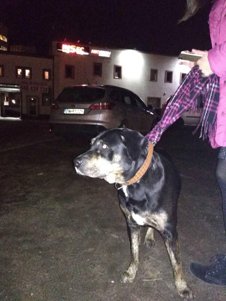 Suka w typie rottweilera znaleziona na pl. Wróblewskiego