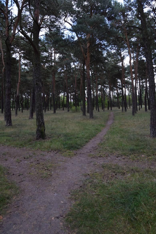 Las w mieście. Zostawić czy cywilizować?