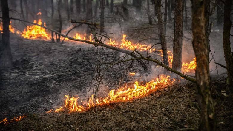 We wtorek, 9 kwietnia, przy ul. Końcowej w Witnicy zapaliła się trzcina i zagajnik. Pożar najprawdopodobniej został wywołany przez człowieka. To kolejna