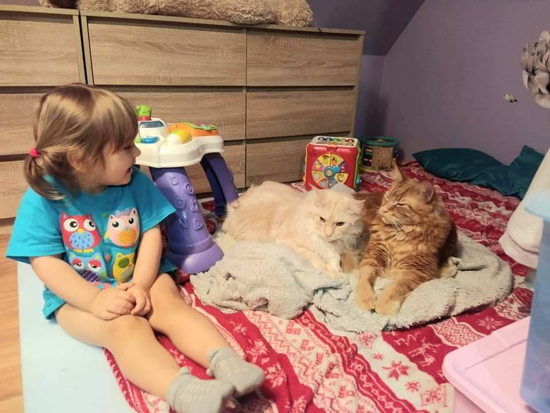 Mówi się, że pies jest największym przyjacielem człowieka. Właściciele kotów pewnie mają na ten temat inne zdanie. Z okazji Międzynarodowego Dnia Kota