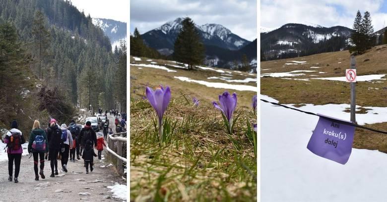 Tak Dolina Chochołowska wyglądała w sobotę, 24 kwietnia