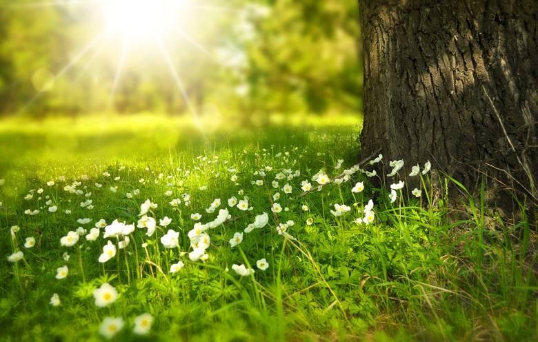 Ludzie urodzeni wiosną to niespokojne duchy, mają mnóstwo energii i zapału. Zazwyczaj imają się wielu zajęć i są pasjonatami tego, co robią. Muszą jednak