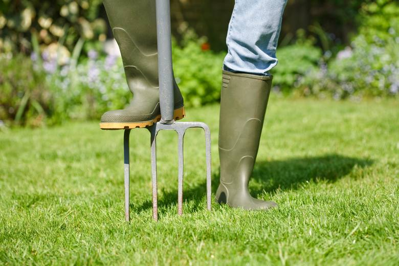 Piękny trawnik w przydomowym ogrodzie