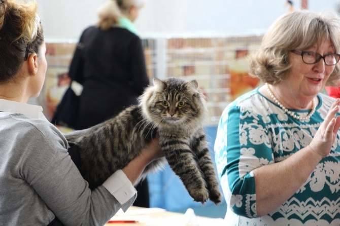 Wystawa Kotów Rasowych w Białymstoku