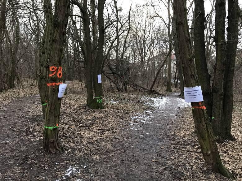 """Najpierw protestowali mieszkańcy, potem same drzewa, na których umieszczone zostały kartki z hasłami: """"Aż tak ci przeszkadzam, by mnie wycinać?"""", """"Codziennie produkuję tlen dla 4 osób. Czy nie zasługuję by tu zostać?"""". W lesie przy Forcie VII w związku z budową drogi ma zostać wyciętych..."""