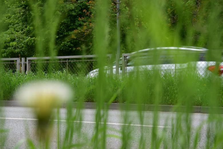 Czy tylko nam się wydaje, że tej wiosny służby porządkowe zapomniały o strzyżeniu trawników? Tak prezentują się trawniki wzdłuż ulicy Roosevelta w Inowrocławiu.