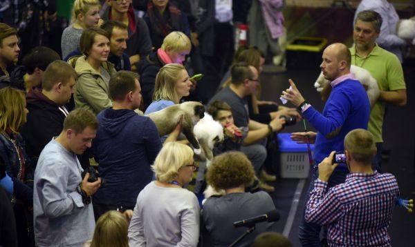 Kocie piękności na start! Już w sobotę i niedzielę w Łodzi odbędzie się Międzynarodowa Wystawa Kotów Rasowych