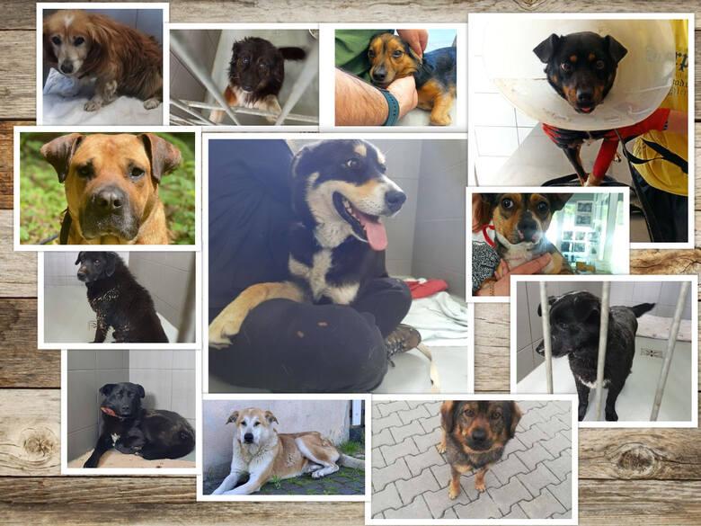 Prezentujemy czworonożnych mieszkańców Schroniska dla Bezdomnych Zwierząt w Dyminach, które czekają na nowy dom. Chcesz zaopiekować się psem ze schroniska?
