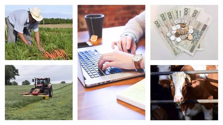 Krajowy Ośrodek Wsparcia Rolnictwa startuje 1 września