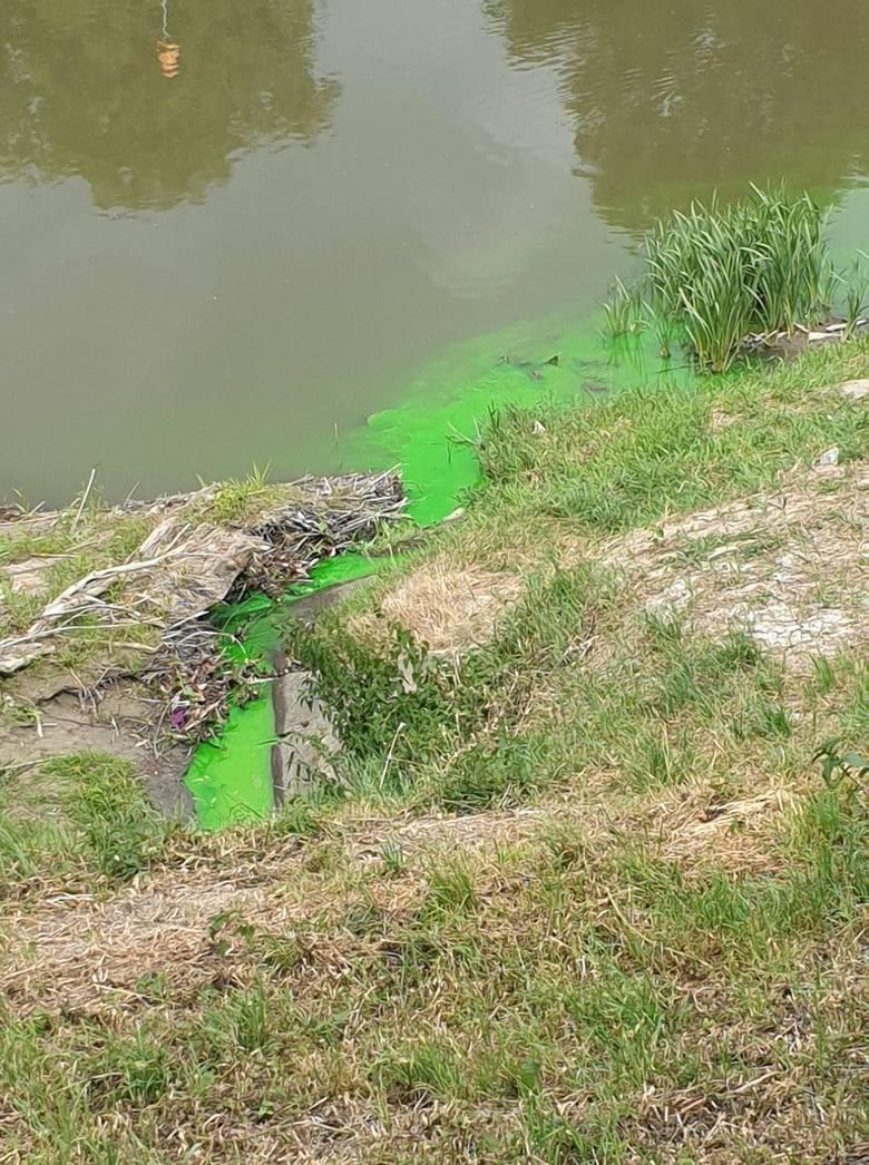 Dziwny zielony płyn wpływa do Wisłoka w Rzeszowie. Co to takiego? [ZDJĘCIE INTERNAUTKI]