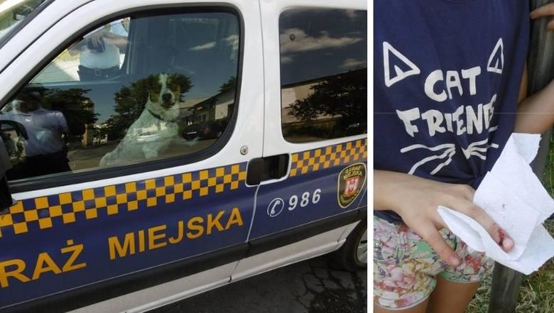 - Wczoraj otrzymaliśmy zgłoszenie w sprawie pogryzienia dziecka przez psa biegającego po osiedlu Piastowskim - informują strażnicy miejscy z Inowrocławia.Funkcjonariusze