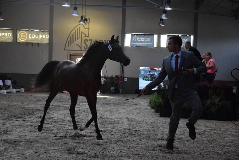 Pokaz ogiera i klaczy aukcyjnych zakończyły święto koni arabskich w Michałowicach [ZDJĘCIA]