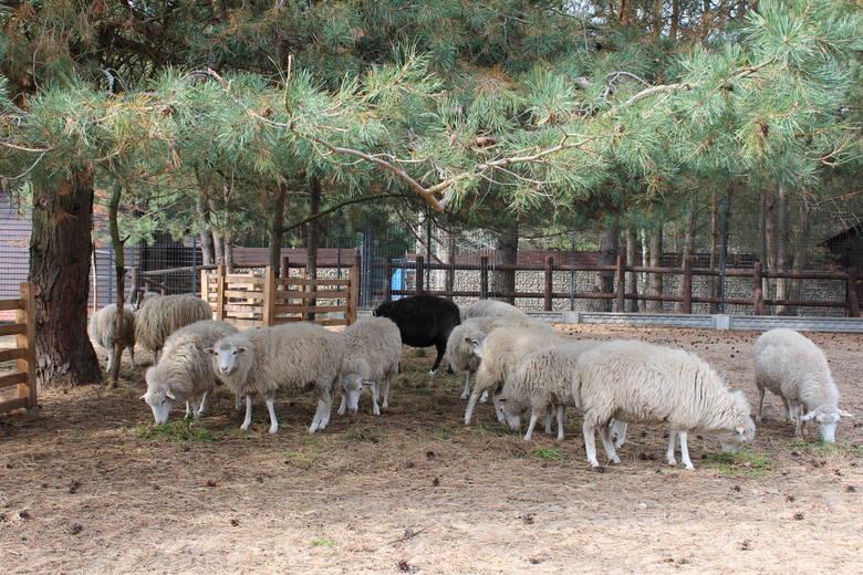 Zagroda Pokazowa Zwierząt w Centrum Edukacji Ekologicznej w Chocińskim Młynie