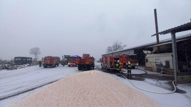 Pali się suszarnia kukurydzy w Boryniu (gm. Sulechów). Siedem zastępów straży ratuje blisko 30 ton kukurydzy