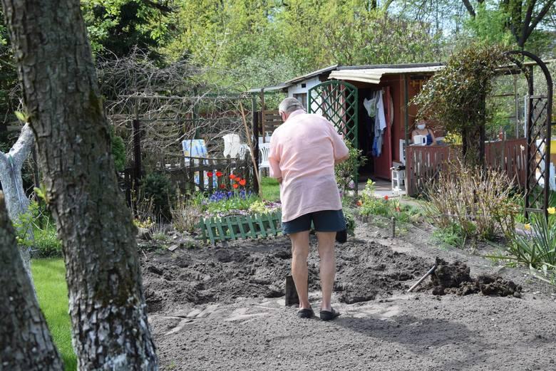 Na działkach praca wre, choć pogoda przypomina bardziej lato niż wiosnę, to prace są typowo wiosenne