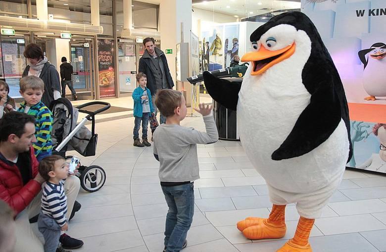 Pingwiny z Madagaskaru wylądowały w Krakowie [ZDJĘCIA]