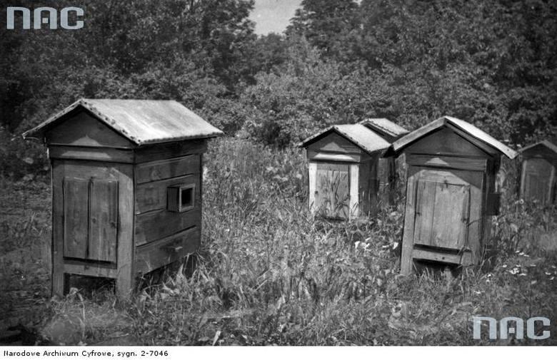 Hodowla pszczół w Generalnej Guberni.