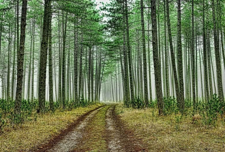 Od 1945 roku poprawiła się lesistość, zmienia się także struktura naszych lasów. Przybywa drzew liściastych, a leśnicy odchodzą od monokultur, stawiając