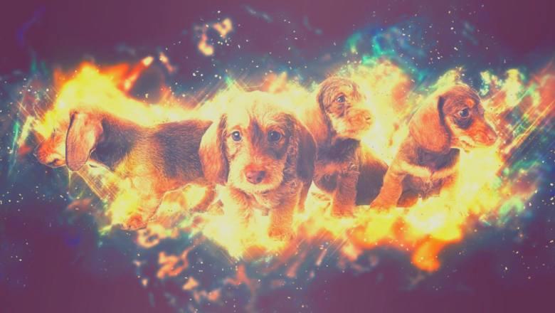 Czy znasz znak zodiaku swojego psa? To może sporo wyjaśnić! PSI HOROSKOP