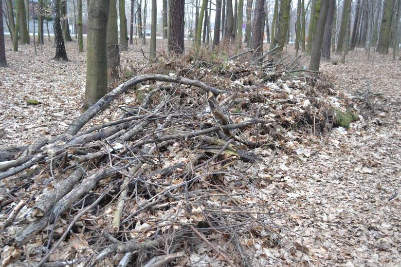 Mieszkańcy lubią spacerować po Lesie Zagórskim. Niektóre drzewa leżą tam przewrócone, uporządkowano gałęzie. Zobacz kolejne zdjęcia. Przesuń zdjęcia