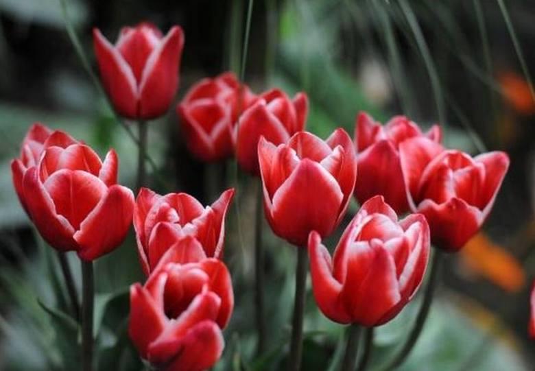 Wyjątkowe ŻYCZENIA NA DZIEŃ MAMY. Znajdź oryginalny wierszyk dla MAMY. Krótkie życzenia dla mamy SMS 13.05.20
