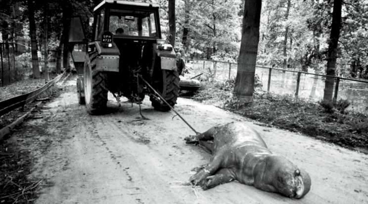 Opole 1997. Ogród zoologiczny. Widok martwych zwierząt robił wstrząsające wrażenie. Nawet hipopotamy utonęły w wielkiej wodzie.