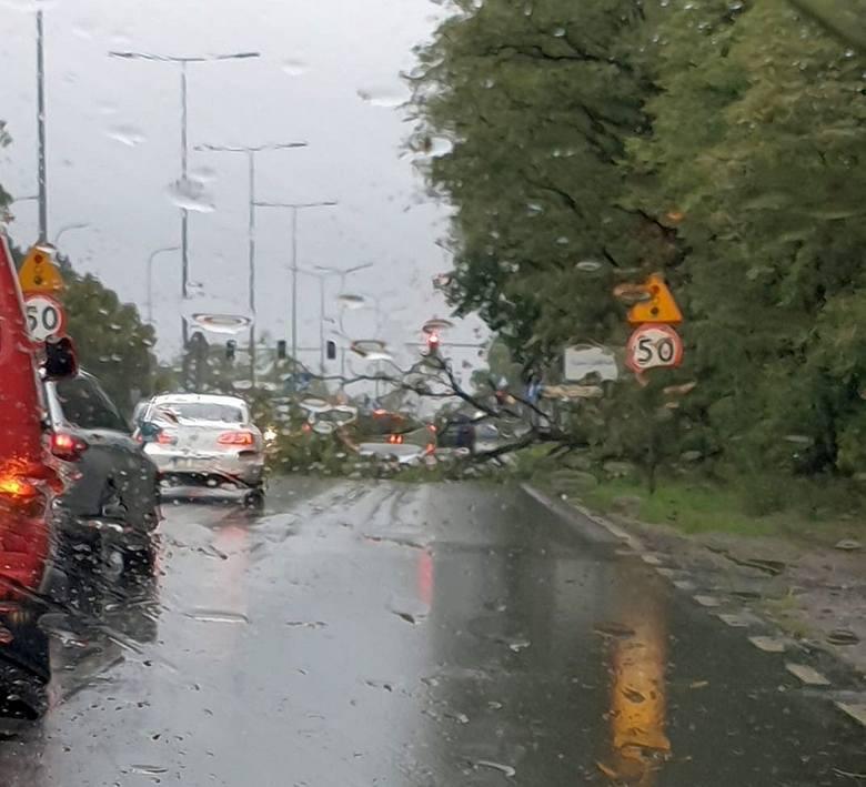 Wiatr przewrócił drzewo na ulicy Fordońskiej. Na szczęście, nikomu nic się nie stało.