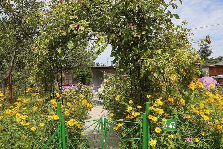 Piękne altanki i domki w ogródkach działkowych przy ul. Milionowej