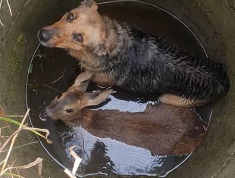 Nietypową parę uwięzioną w studni w miejscowości Krzewina w powiecie pilskim uratowali w poniedziałek strażacy.