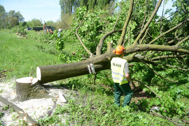 Lex Szyszko: Nowe zasady wycinki drzew. Co się zmieniło?